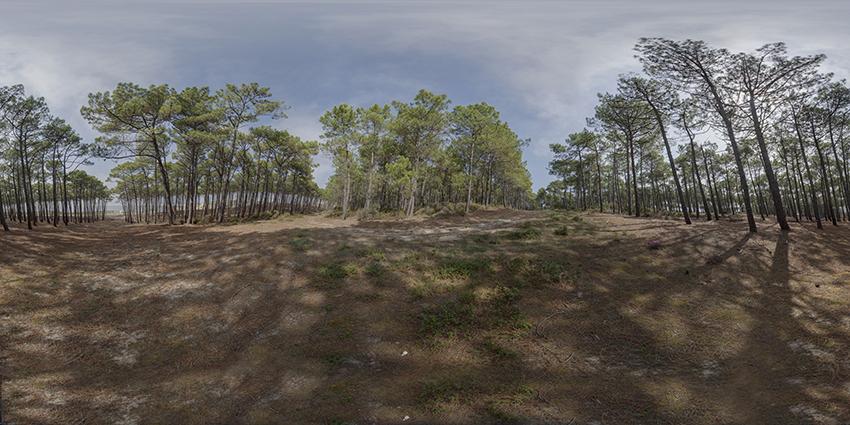 image 360 foret la teste de buch