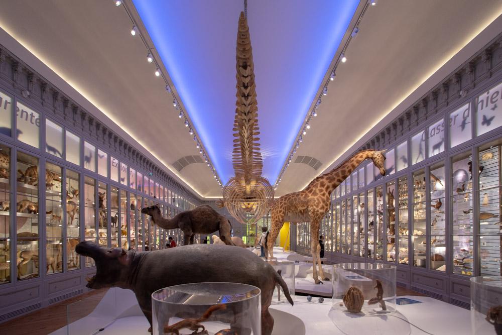Salle du musée d'histoire naturelle Bordeaux