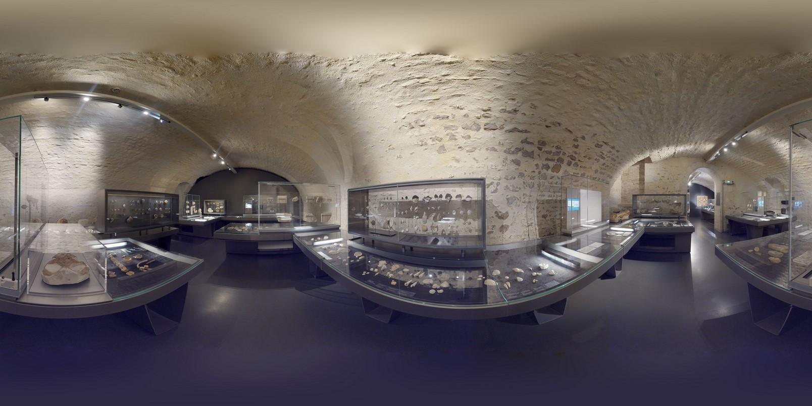 Muséum histoire naturelle La Rochelle Fossiles
